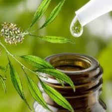كيفية استخدام زيت شجرة الشاي لعلاج قشرة الرأس